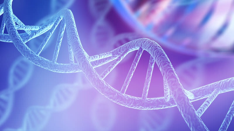 DNA Roche legal